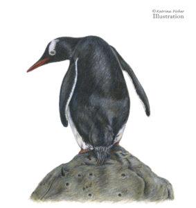 Clowing around _Gentoo Penguin
